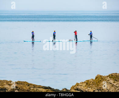 Group of paddle boarders in calm sea next to rocky shore, Firth of Forth, East Lothian, Scotland, UK - Stock Image