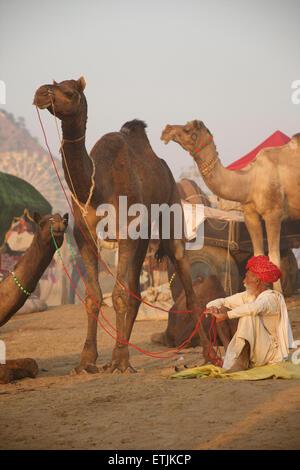 Camel market. Pushkar camel fair, Pushkar, Rajasthan, India - Stock Image