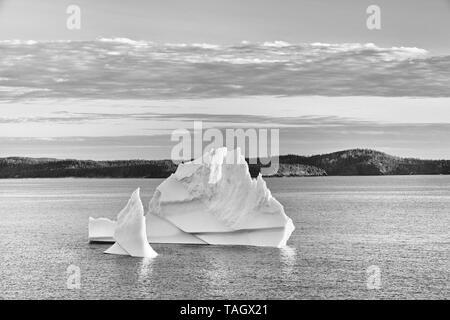 Icebergs floating in Salvage Bay of the Atlantic Ocean Eastport Newfoundland & Labrador Canada Eastport Newfoundland & Labrador Canada - Stock Image