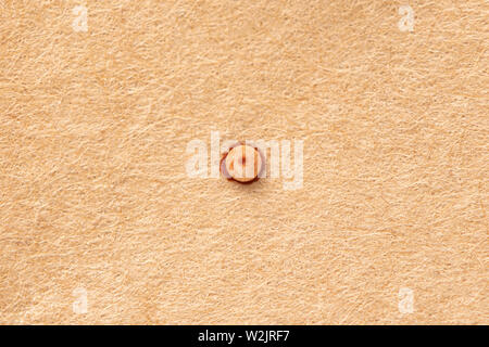 Top view of a single egg from a Parnassian Clodius / Apollo butterfly - Stock Image