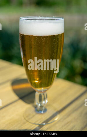 Cold Belgian white beer in glass served outside in sunny day - Stock Image