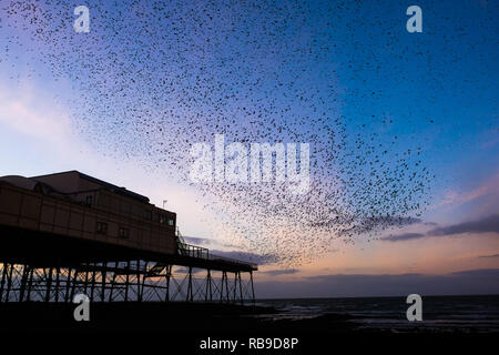 Aberystwyth Wales, UK. 08th Jan, 2019. UK Weather On a clear cold evening, after a day of winter sunshine, flocks of tens of thousands of tiny starlings fly in huge 'murmurations' in the sky as they return from their daily feeding grounds to roost for the night on the forest of cast iron legs underneath Aberystwyth's Victorian seaside pier. Aberystwyth is one of the few urban roosts in the country and draws people from all over the UK to witness the spectacular nightly displays. photo Credit: keith morris/Alamy Live News - Stock Image