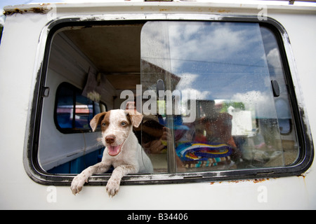 A puppy peers out the window of a van in Mansalay, Oriental Mindoro, Philippines. - Stock Image