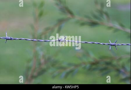 Close up of a strand of barbed wire, against a nature background. - Stock Image