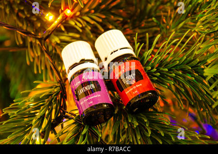 Young Living essential oils pictured balanced on the branch of a Christmas tree. - Stock Image