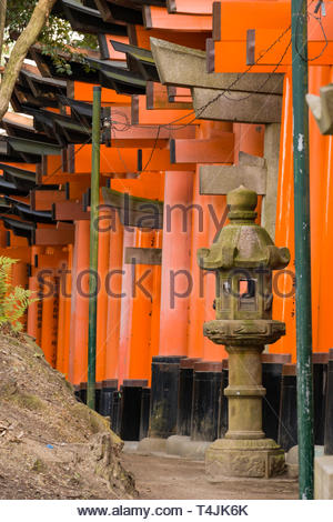 Look along the outside of the Senbon Torii, vermilion red-orange color is associated with the soul of Inari Okami and blessings for life, the earth an - Stock Image