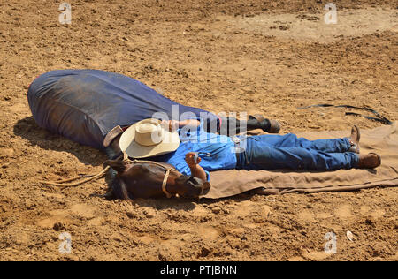 Tom Curtain the singing cowboy 's assistant stockman ,with trained horse  performing in his Outback Experience show in Katherine, Northern Territory, - Stock Image