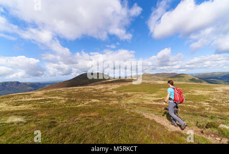 A hiker walking in the English :age District on a sunny summers day in the UK - Stock Image
