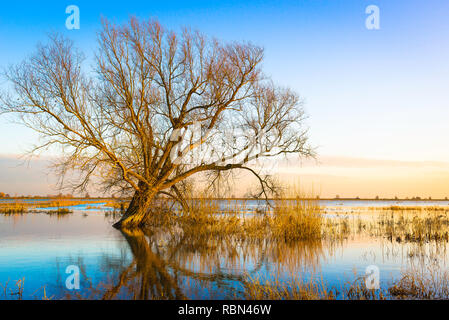 Fens UK, winter view of a partially submerged tree in a flooded Fodder Fen in Cambridgeshire, England, UK. - Stock Image