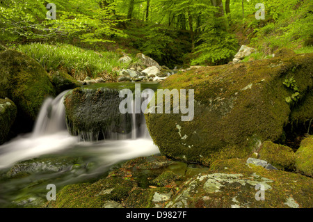 Waterfall on the River Yealm in Dendles Wood National Nature Reserve - Stock Image