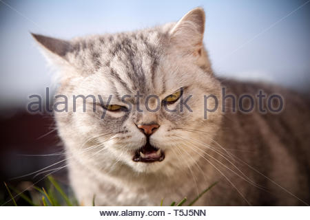 Sunny is a bad cat - Stock Image