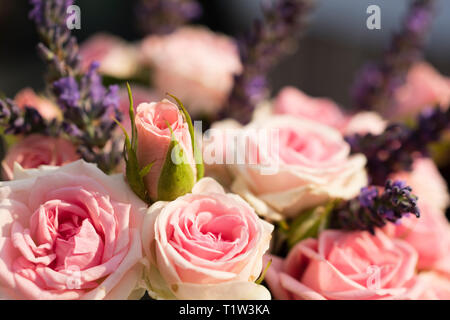 Close up of bouquet of pink roses. - Stock Image