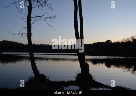 Two Trees by the lakeside - Stock Image