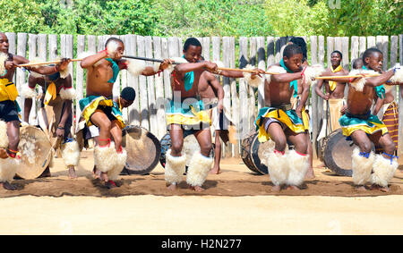 Swazi dance troupe in traditional clothes chanting singing and dancing  The Sibhaca at Mantenga Cultural Village, - Stock Image