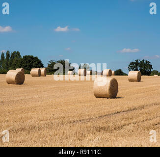 Bales of hay during harvesting time Derbyshire England UK - Stock Image