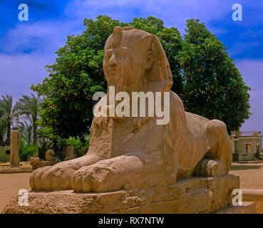 The giant Alabaster Sphinx (between 1700 and 1400 BC). Ruins of Memphis. Egypt. Africa - Stock Image