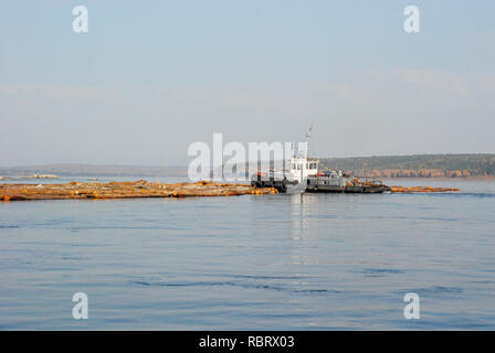 tow alloys of logs down the river Yenisei. Russia - Stock Image