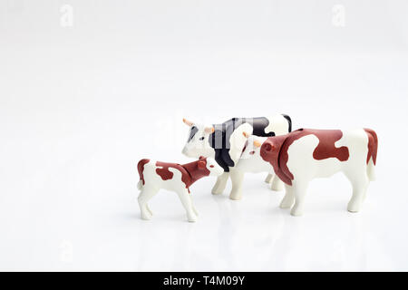 Detail of toy plastic cows in isolated white background. - Stock Image