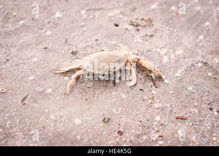 Small crab on the sand - Stock Image