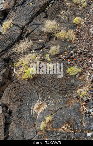 Pahoehoe lave flow with small shrubs and rubbish dumped in Playa San Juan, Tenerife, Canary Islands, Spain - Stock Image