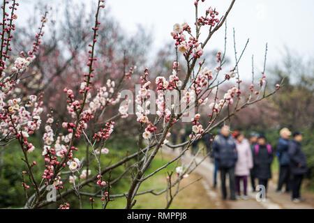 Nanjing, China's Jiangsu Province. 16th Feb, 2019. People visit Meihua Mountain in Nanjing, capital of east China's Jiangsu Province, Feb. 16, 2019. Plum flowers blossom as the weather becomes warm. Credit: Li Bo/Xinhua/Alamy Live News - Stock Image