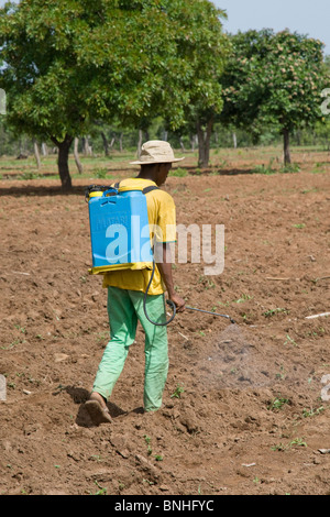 A man from a village in Damango district, Ghana. He is spraying the ground to destroy weeds in preparation for the - Stock Image