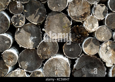 Many wood logs form a distinct timber pattern with their cut wooden ends exposed. Back and white abstract woodland - Stock Image