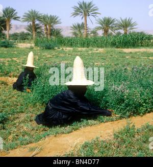 Women working in the fields Hadramaut Yemen - Stock Image