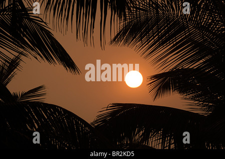 Sun, golden sky and silhouetted palm trees. Indian sunset - Stock Image