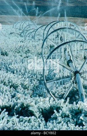 frozen ice on field irrigation system - Stock Image