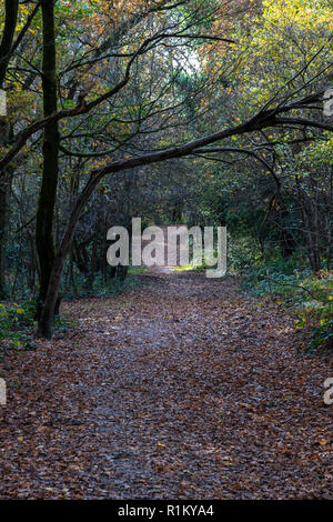 Autumn colours on The Common in Tunbridge Wells. Bracken, brambles and the last of the leaves on the trees.+ - Stock Image