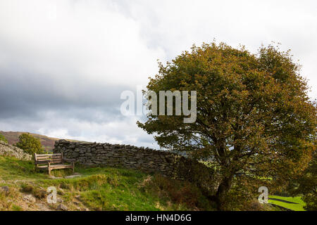 A wooden bench beneath a tree on the hills above Windermere in the Lake District - Stock Image