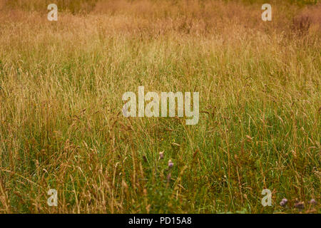 A field of grass in summer, Lake District National Park, Grange, Cumbria, England. - Stock Image