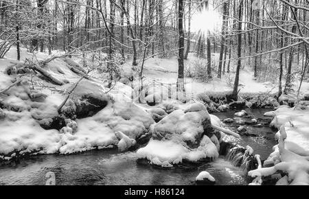 Stream in the snowy forest in Campigna,Italy - Stock Image