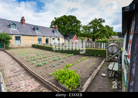 Row of Terraced Miners Cottages with Vegetable Gardens at Beamish Living Open Air Museum - Stock Image
