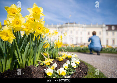 Ludwigsburg, Germany. 22nd Mar, 2019. On the first day of the 65th garden season, a woman kneels in blooming baroque in front of the Residenzschloss to photograph flowers. Credit: Sebastian Gollnow/dpa/Alamy Live News - Stock Image
