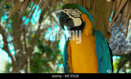 Close up, side view of parrot head Close up of a parrot s face and head, side view - Stock Image