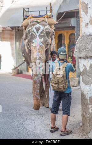 A tourist taking a picture of a elephant on a small street in Udaipur, India. - Stock Image