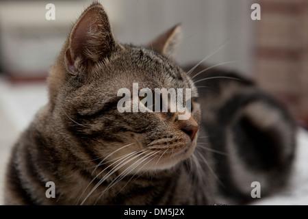 lovely cat - Stock Image