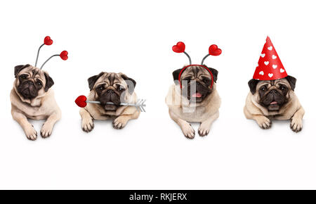 four cute Valentine love pug puppy dogs, with hearts, hanging on white banner, isolated - Stock Image