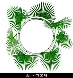 Green tropical palm leaves. In the circle. Advertising space. illustration - Stock Image