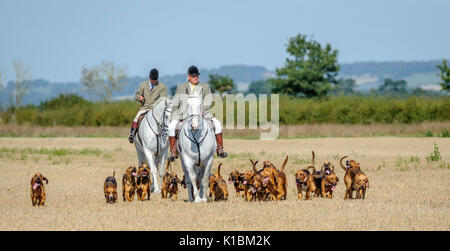 Cranwell Bloodhounds - Hound Exercise and Summer Ride with The Master & Huntman plus the hounds - Stock Image