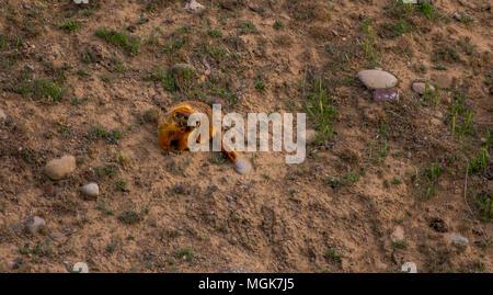 Marmot sitting near its house - Stock Image