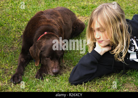 Elderly chocolate Labrador retriever with collar lying on grass next to blonde child. - Stock Image
