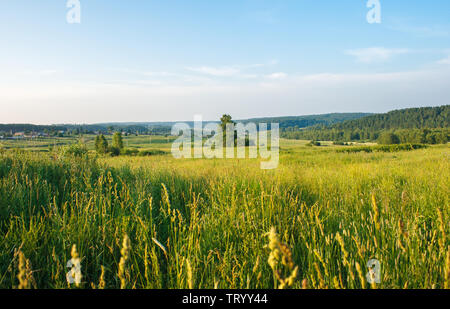 russian siberian landscape with field and bright blue sky on summer sunset - Stock Image