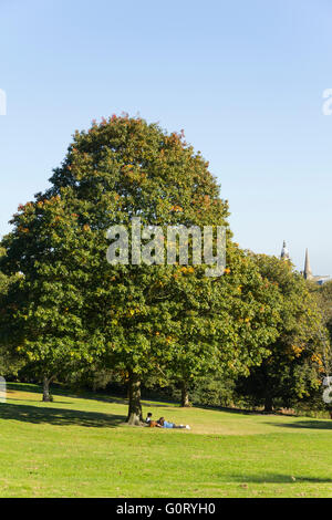 Three young people relax under an oak tree in Queens Park, Bolton  on a sunny day in early autumn. - Stock Image
