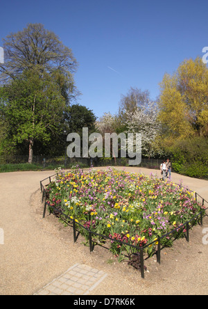 Spring flowers at Hyde Park London - Stock Image
