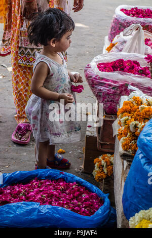 Small Indian girl looking at baskets of flowers at a market stall in Old Delhi, Delhi, India - Stock Image