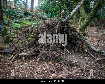 Forest shelter taken at Leith Hill Surrey - Stock Image