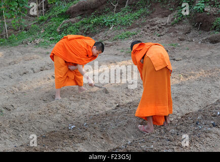 Saffron robed monks working in a field besides the monastery, Luang Prabang, Laos - Stock Image